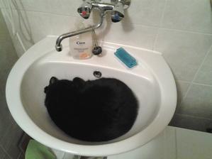Už dvruhý deň si aj zuby chodím čistiť do sprchy. Mladý pán sa rozhodol, že umývadlo patrí len jemu... :-)