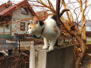 Saša, to je vyslovene dedinská mačka. Loví myši, keď prší, nosí mi pred dvere dážďovky a minule, keď susedovi uletel papagáj... no čo vám poviem. Papúch nemal šancu. Plná záhrada farebného peria a smutný sused. :o)