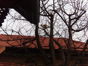 A Saša miluje výšky. Moje štvormetrové borovice ju už moc nezaujímajú. Osemmetrová susedova višňa, tak to je o niečom inom... :o)