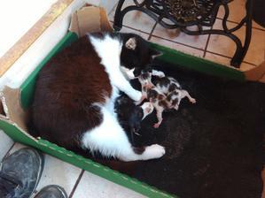 Ani to netrvalo tak dlho. Včera som písal, že Zuza bude čoskoro rodiť a už má tri mačiatka Narodili sa štyri, ale prvé neprežilo. Teraz jej musím spraviť nejaký prístrešok na noc.