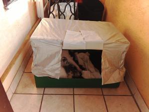 Spodok tvorí krabica z tvrdého kartónu od jabĺk z Lídla a na ňom moja, 40cm vysoká konštrukcia odolná voči dažďu.