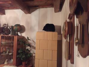 Prišla zima a Ferdinand si našiel nové miesto, kde nocuje. Najlepšie na kachľovej peci, pokiaľ nie je moc horúca. :o)