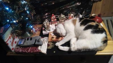 Saša sa takto uvelebila pod stromčekom na darčekoch. :o)