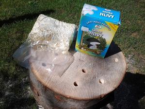 Sadbu hlivy ustricovej som kúpil v záhradkárskych potrebách.