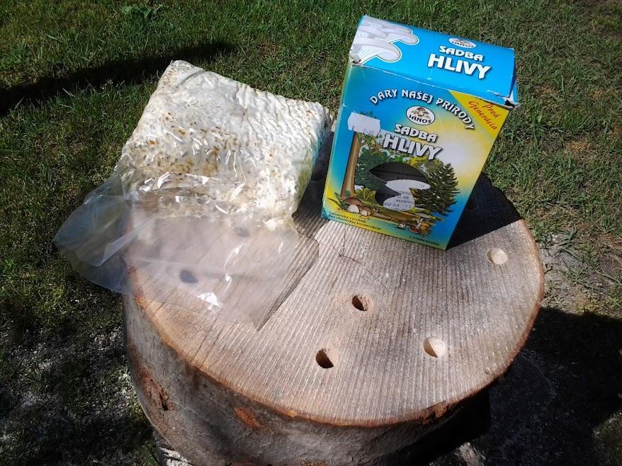 Pestovanie hlivy ustricovej - Sadbu hlivy ustricovej som kúpil v záhradkárskych potrebách.