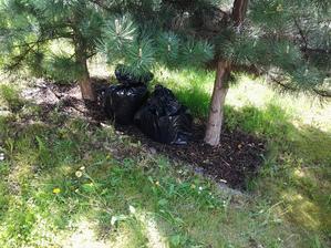 Uzavretý, aby sa pníky zaparili som položil pod borovice, kde nepečie celý deň slnko.