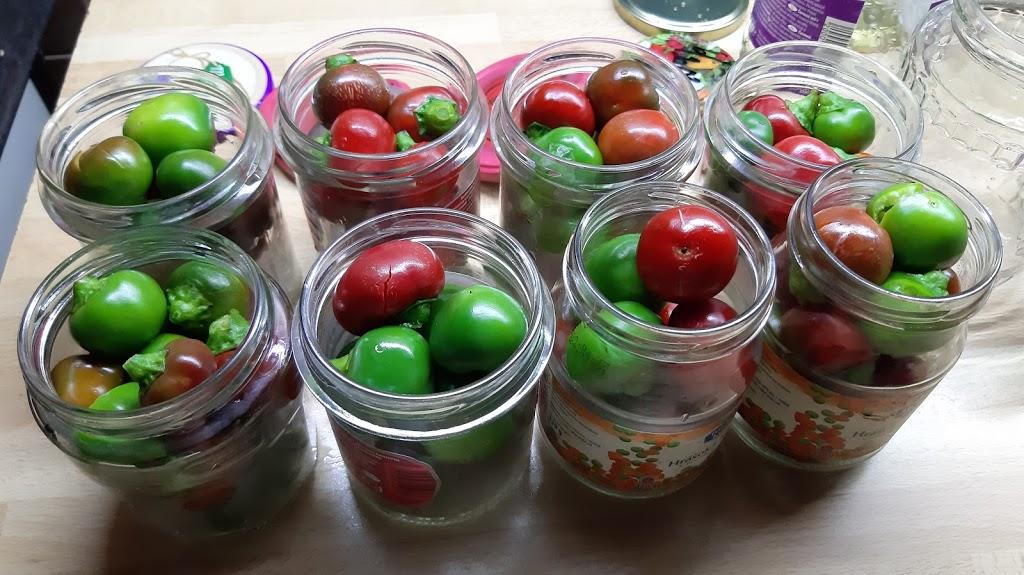 Farby jesene - Niekoľko pohárov feferónov...