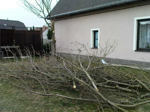 Kácíme strom 03/2011