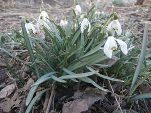 Jaro se probouzí...