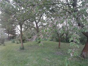 NAŠE OÁZA KLIDU  ... síť je mezi švestkou a hrušní, vedle jabloň, třešeň, vzadu hejno rybízů a ve vzduchu bzukot včel, vůně stromů a zpěv ptáků.