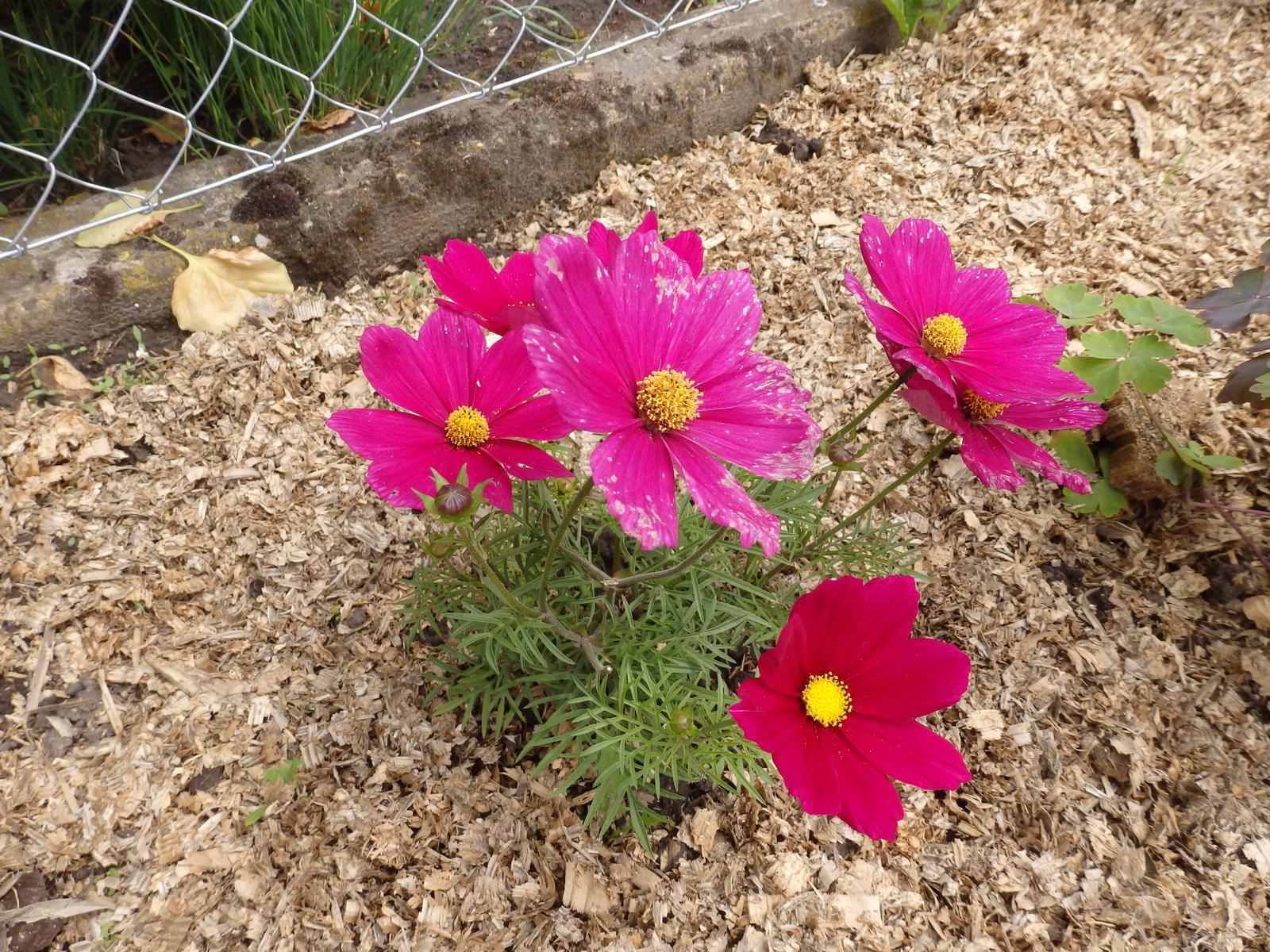 Naše venkovská zahrada - Obrázek č. 88