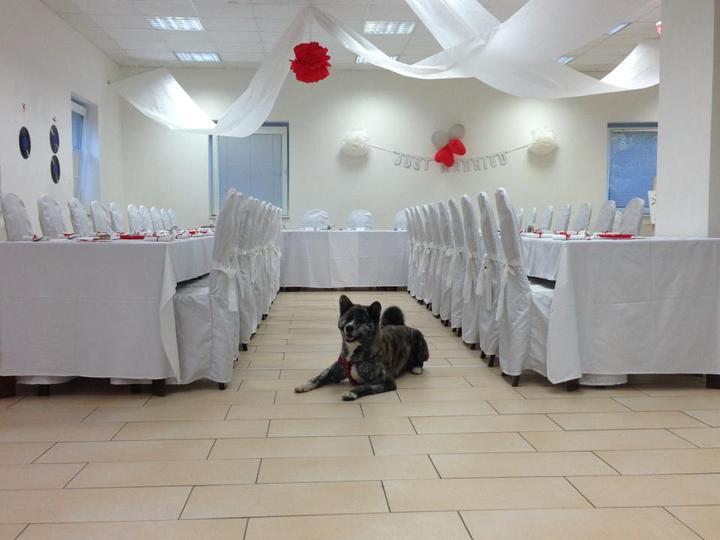 Makéta{{_AND_}}Fanda - z přípravy svatební tabule, naše Ria hlídala aby bylo vše jak má být :-)