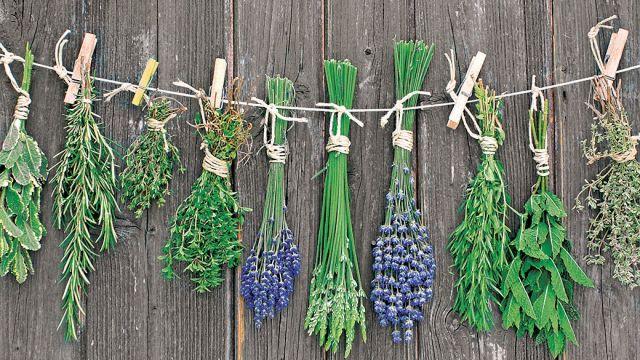 Bylinky a ovocie...receptíky z nich - Bylinky, ktoré sú vhodné v zime, pri prechladnutiach, bolestiach hrdla, kašli...