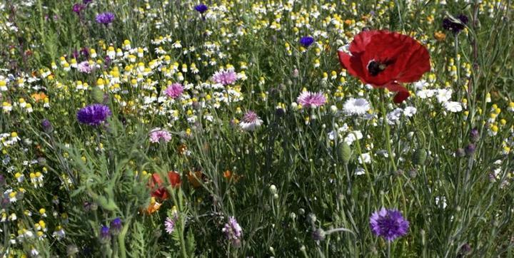 Kalendár zberu byliniek