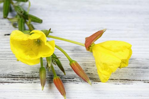 Bylinky a ovocie...receptíky z nich - Pupalka dvojročná (Oenothera biennis)