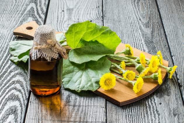 Bylinky a ovocie...receptíky z nich - Podbeľ liečivý (Tussilago farfara)