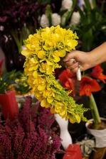 solidago, orchidej, craspedie