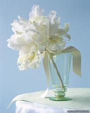 orchidej - bílá Cattleya