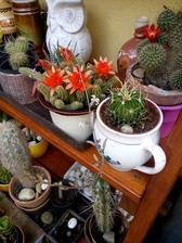Sbírka kaktusů.