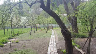 stromy som kus okresal ale s vyrovnanim zahrady bude kopa prace. ale to bude asi plan na 2018