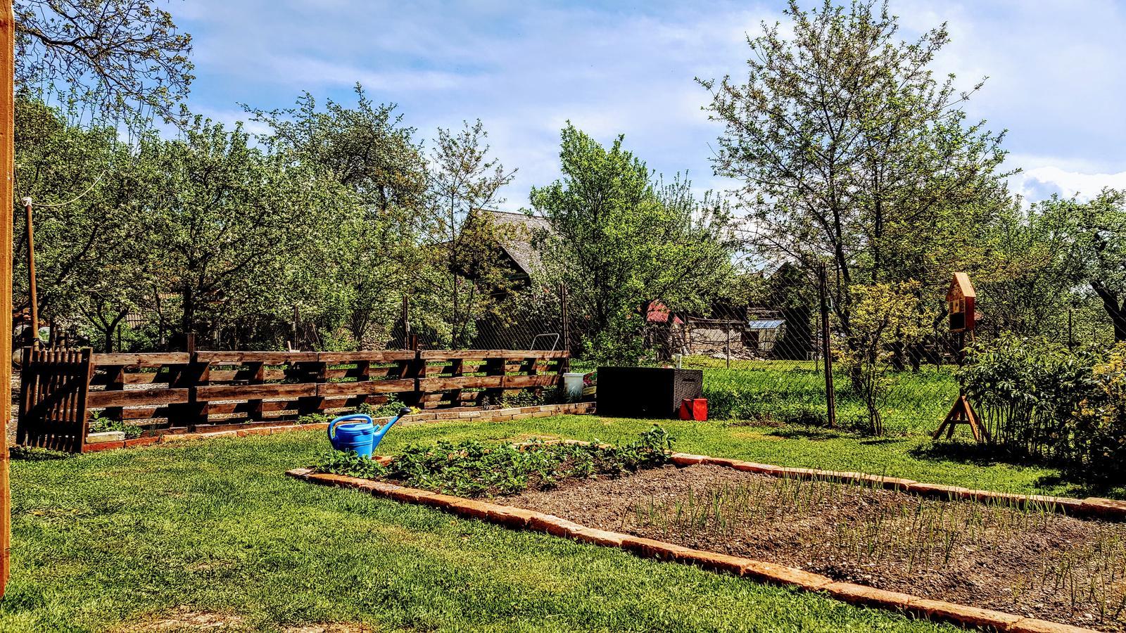 Zahrada a upravy okolo domu - Pomalicky to uz vyzera