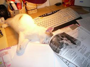 můj asistent při svatebním papírování....
