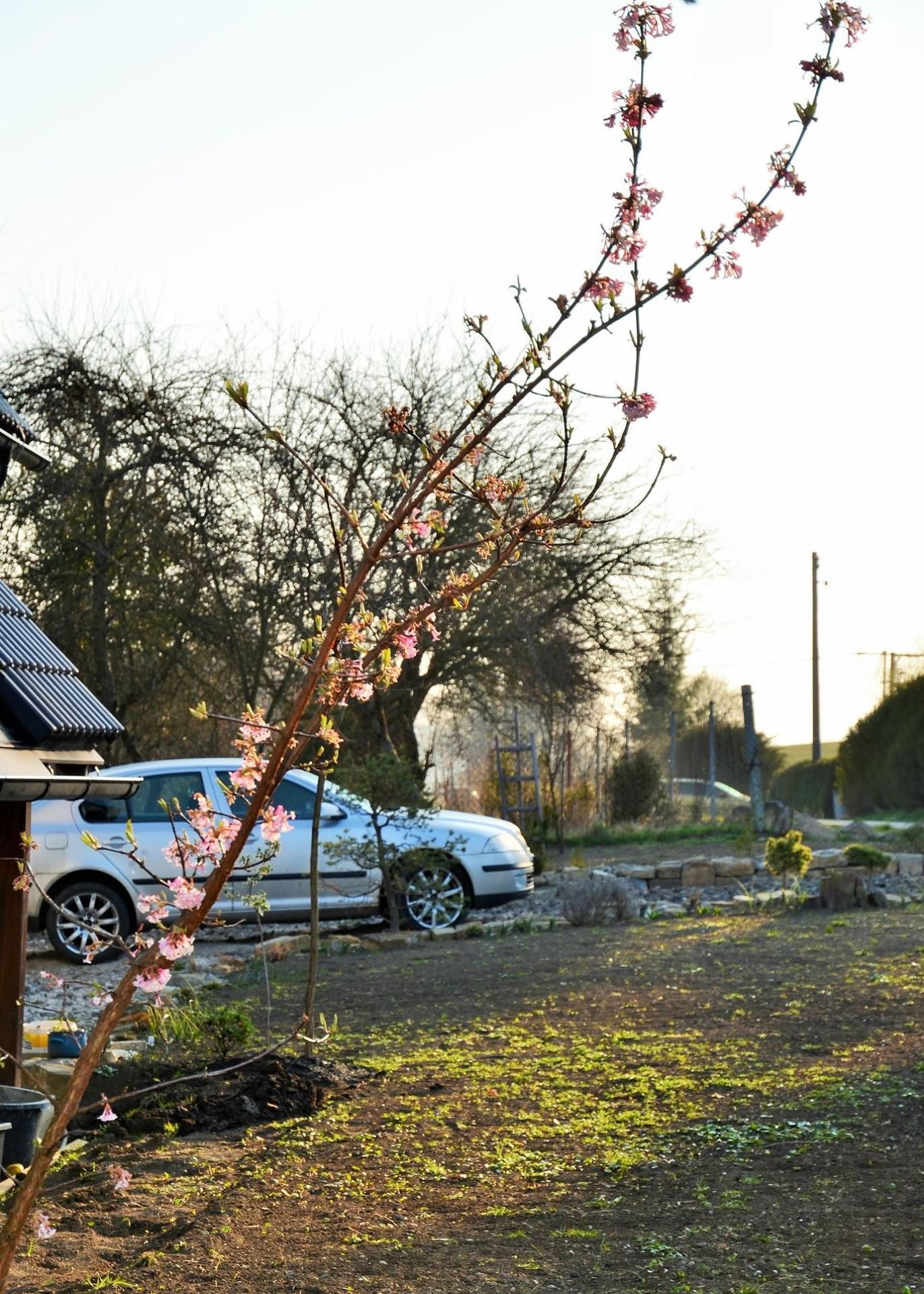 Zahrada - Obrázek č. 10