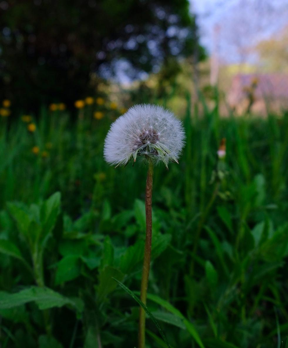 Zahrada - Obrázek č. 20