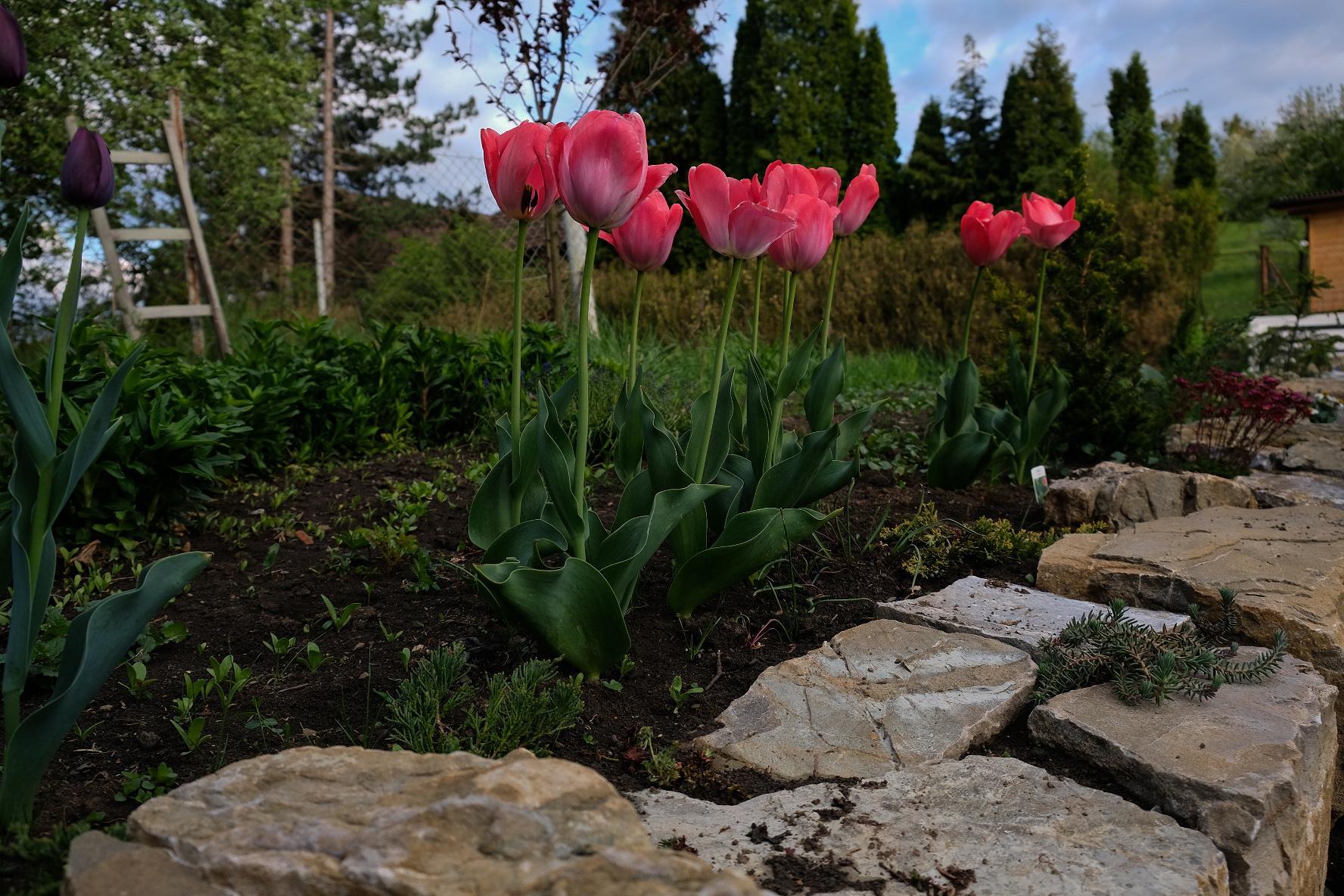 Zahrada - Obrázek č. 22