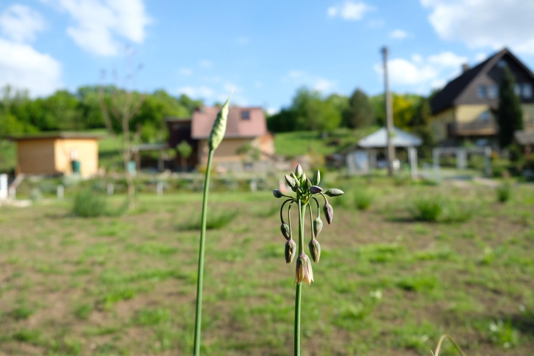 Zahrada - Obrázek č. 30