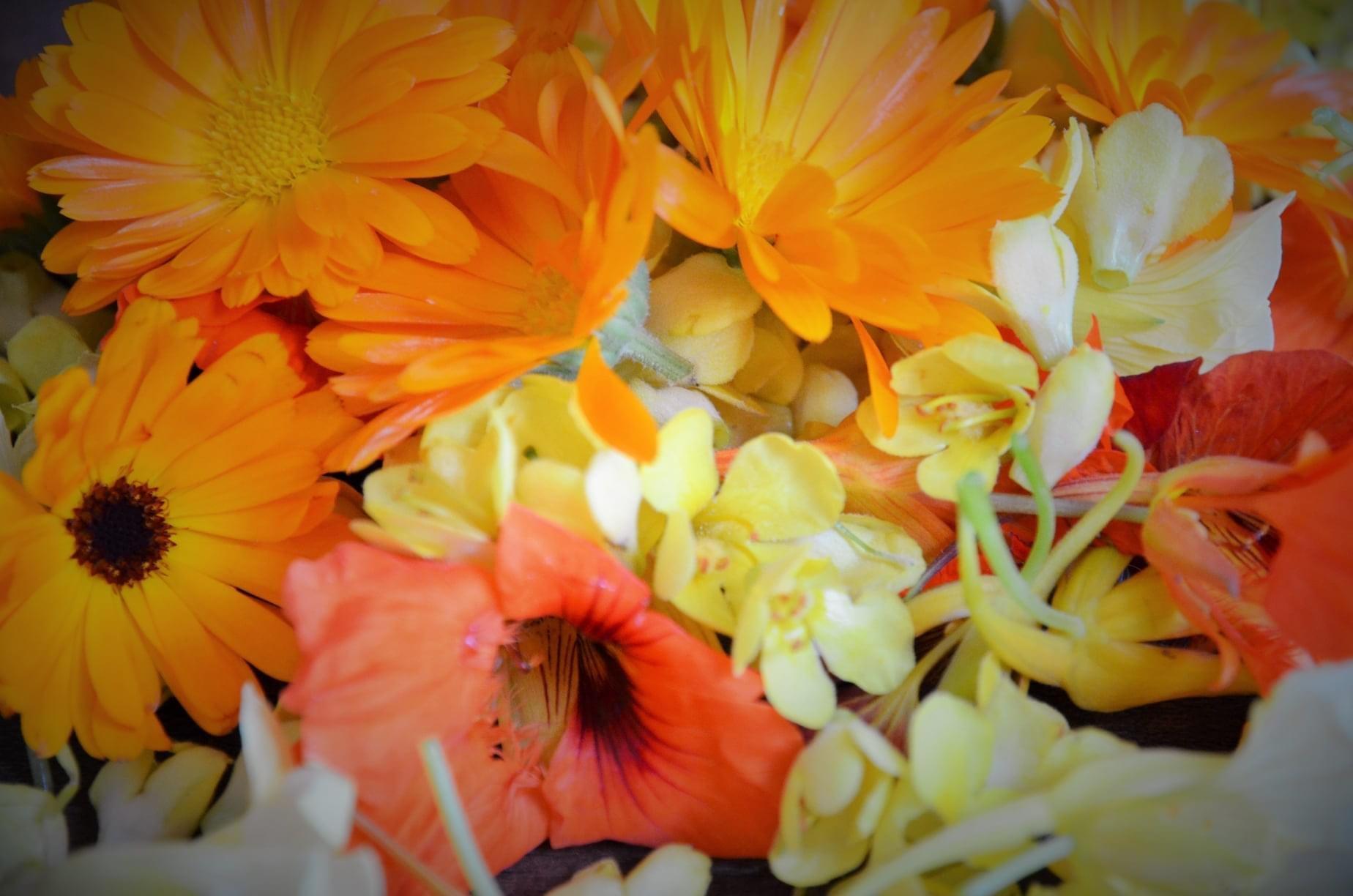 Zahrada - sběr bylin :-)