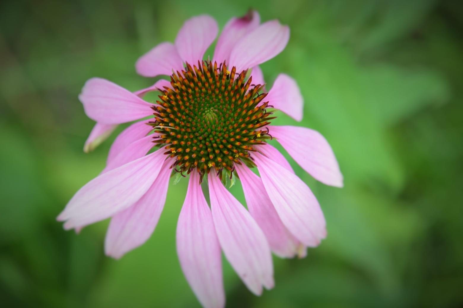 Zahrada - Obrázek č. 58