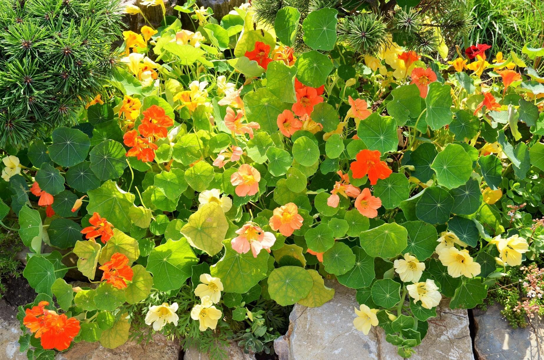 Zahrada - Obrázek č. 66