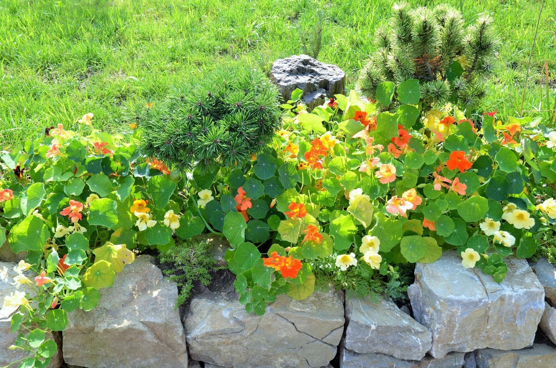 Zahrada - letos máme krásnou úrodu.