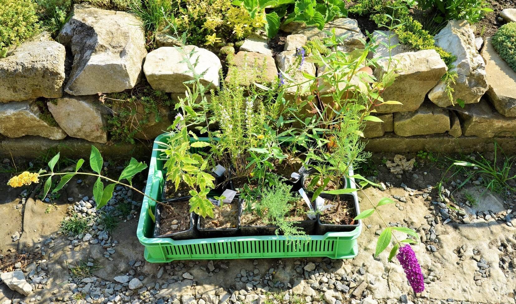 Zahrada - Můj manžel je vystudovaný zahradník a jeho přátelé se zahradám věnuji doposud. Takže každá návštěva končí minimálně takto a do jsme se vraceli z dovolené a 10 bambusu a katalpa v kufru :-)