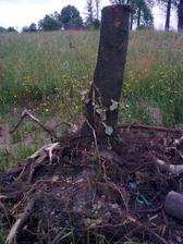 tady bych chtěla využít i kořeny, ale musí to počkat, zatím není čas :)