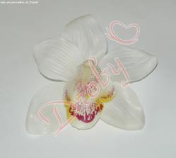 orchidei do vlasů objednaná:)