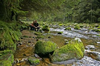 Panenská příroda na Šumavě, prostě nádhera...