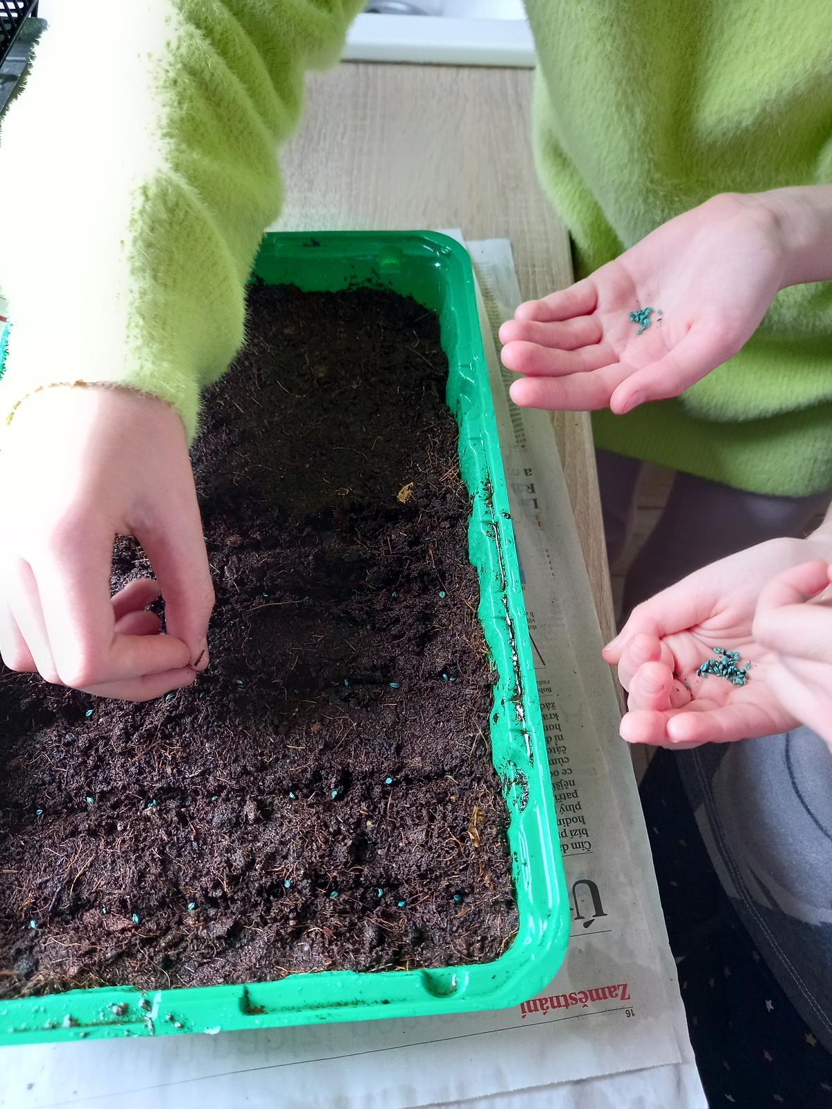 Jedlá zahrada - 21.3. sejeme pažitku a petrželku
