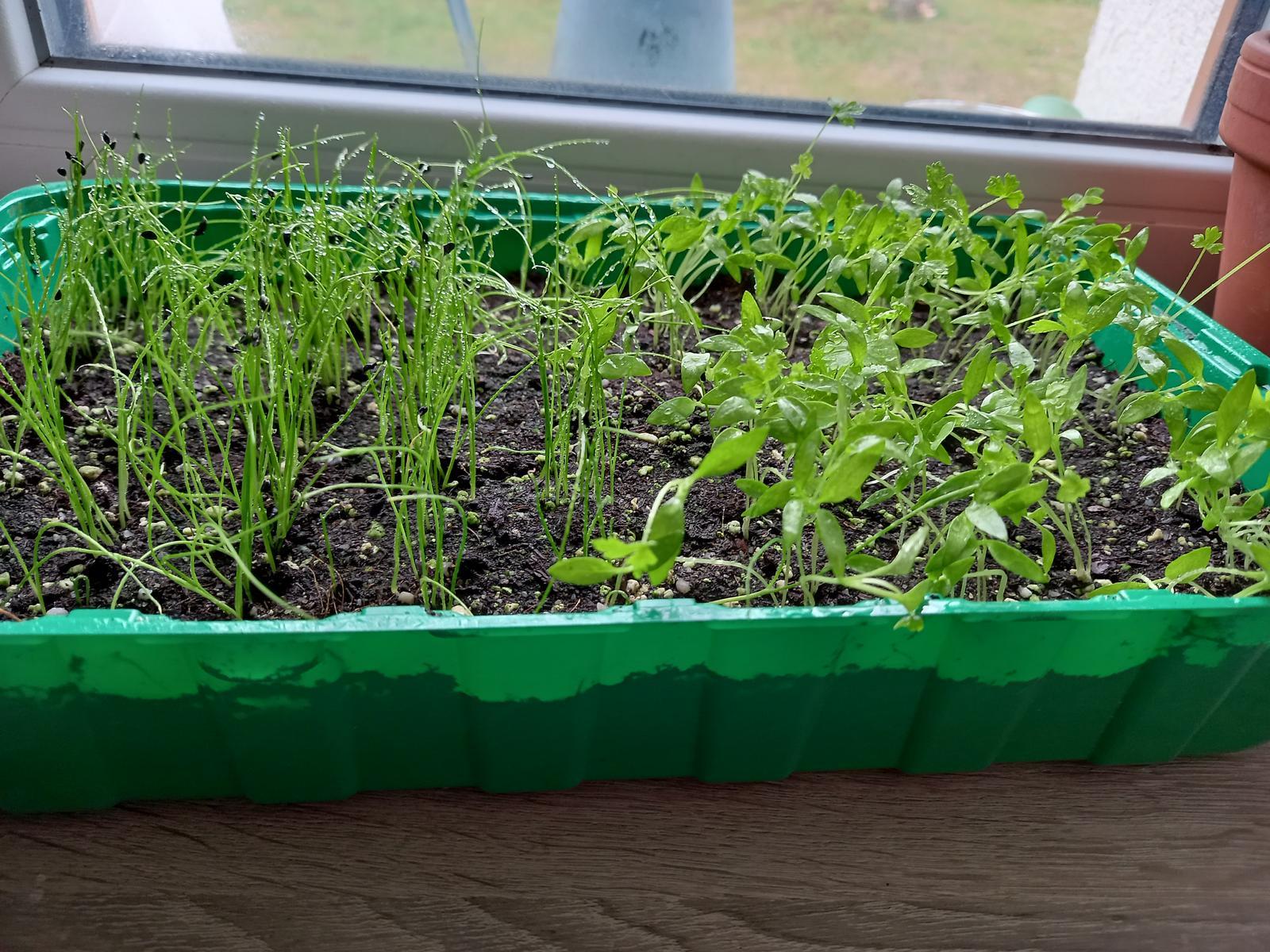 Jedlá zahrada - Po 20 dnech....