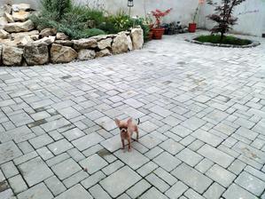 malý psík alebo velka terasa? :-D krásny čivaviačik Leo