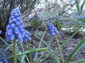 dost bolo zimy, kvety VON!