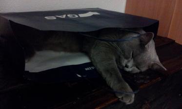 v taske sa mi dobre spi...