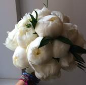 Kulatá svatební kytice z pivoněk,