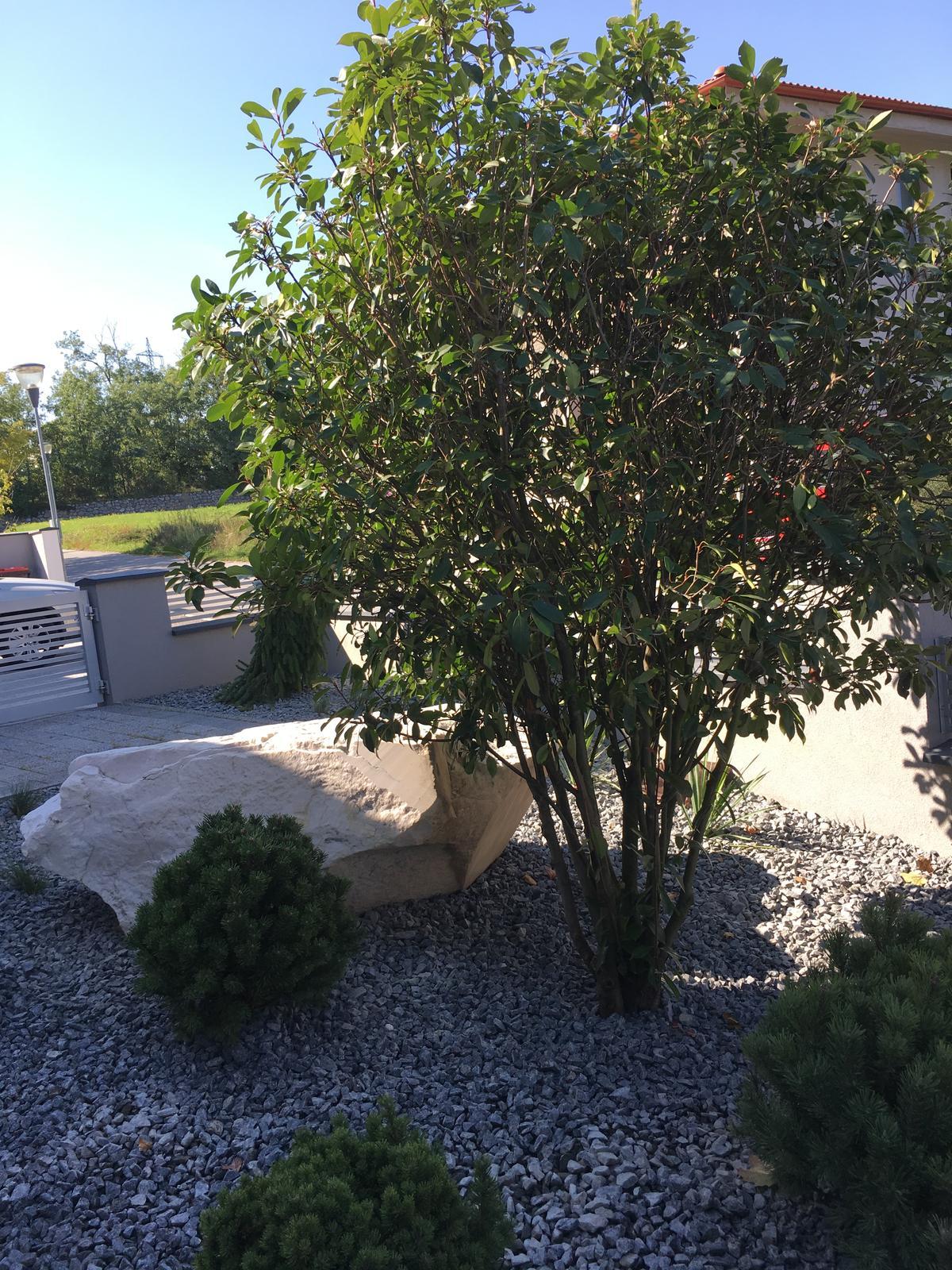 Predna Zahradka - Obrázok č. 5