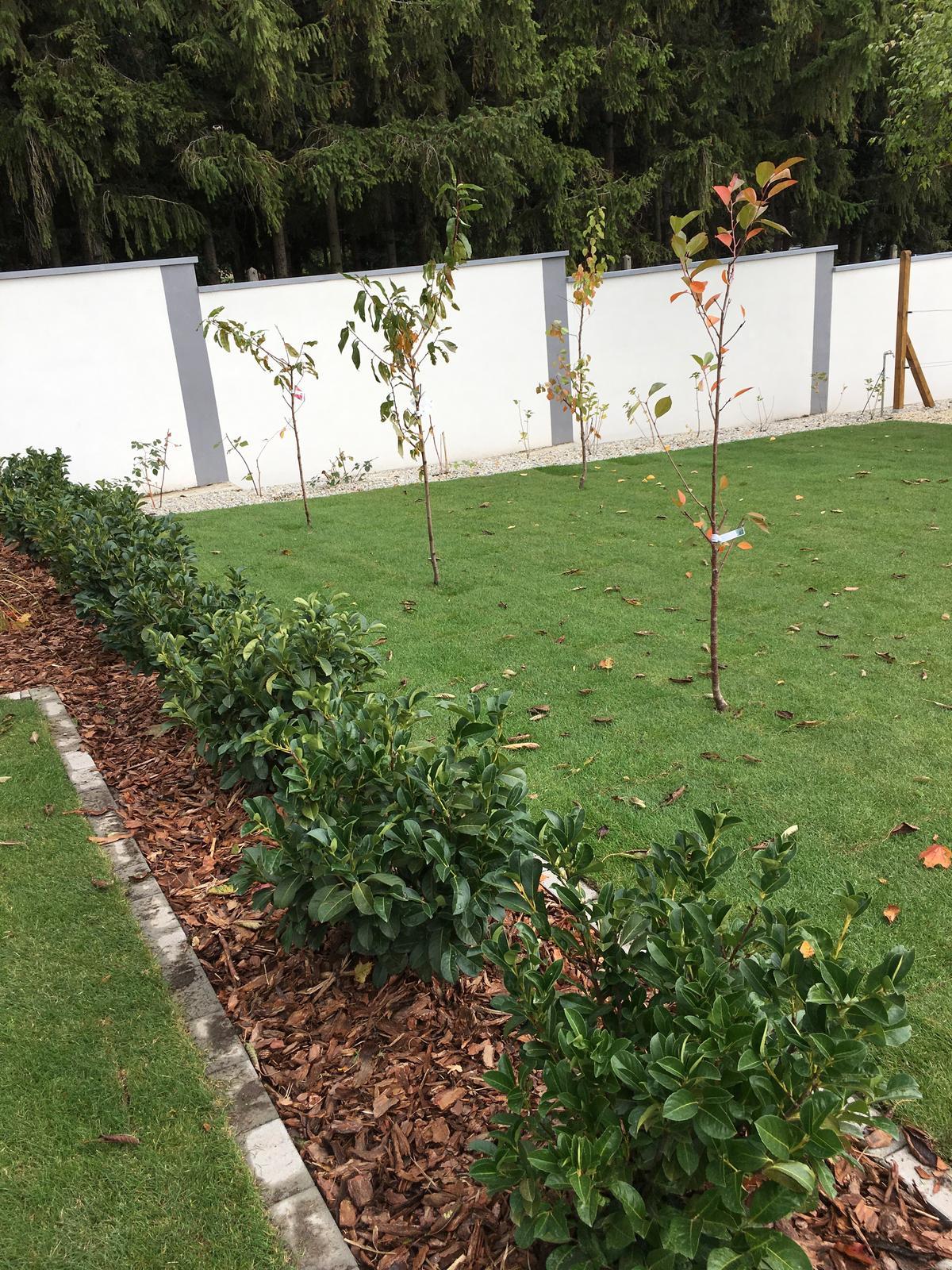 Zahrada - Buduci zivy plot