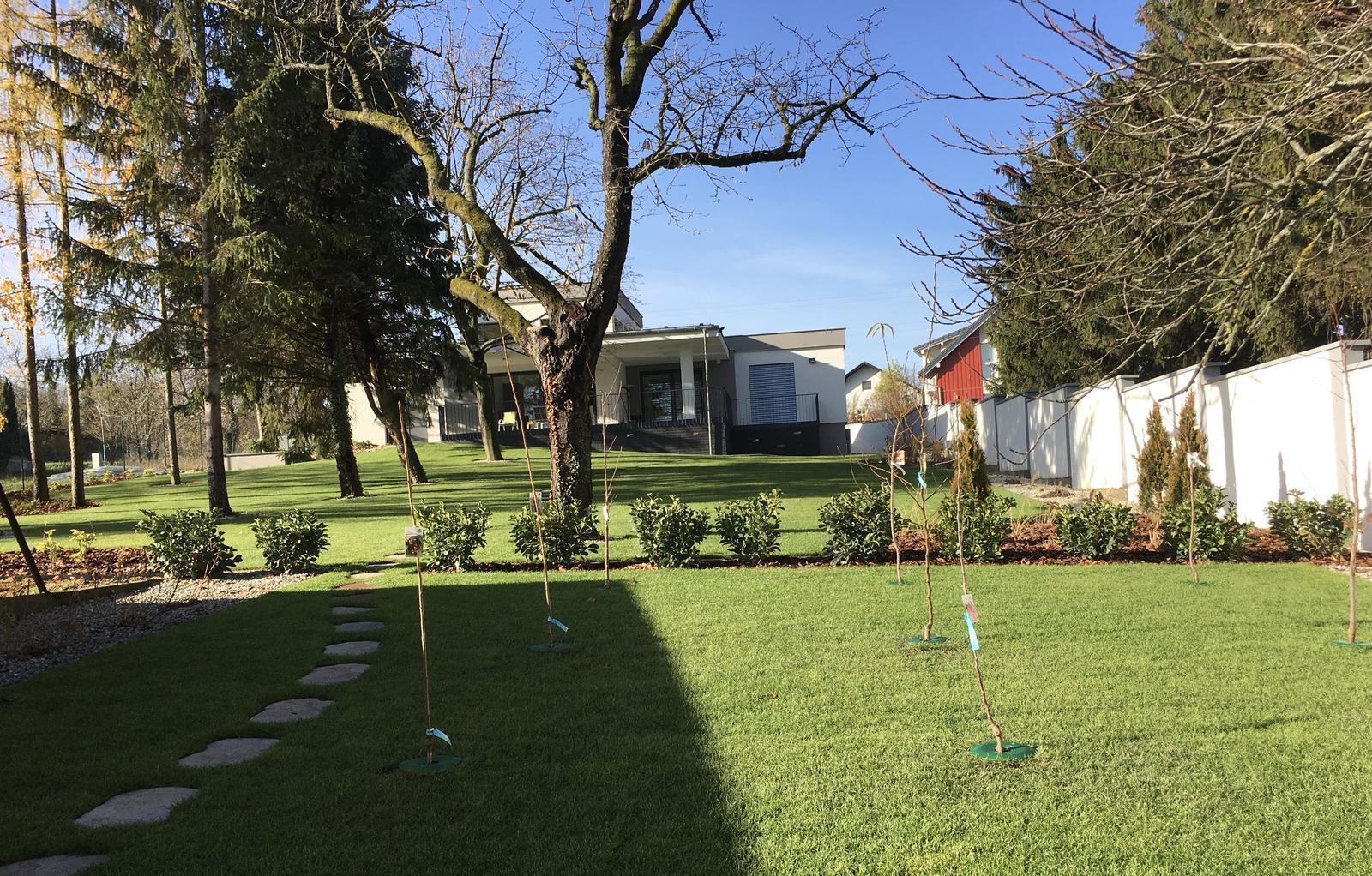Vyvysene zahony & ovocne stromy - Ovocne stromceky zasadene