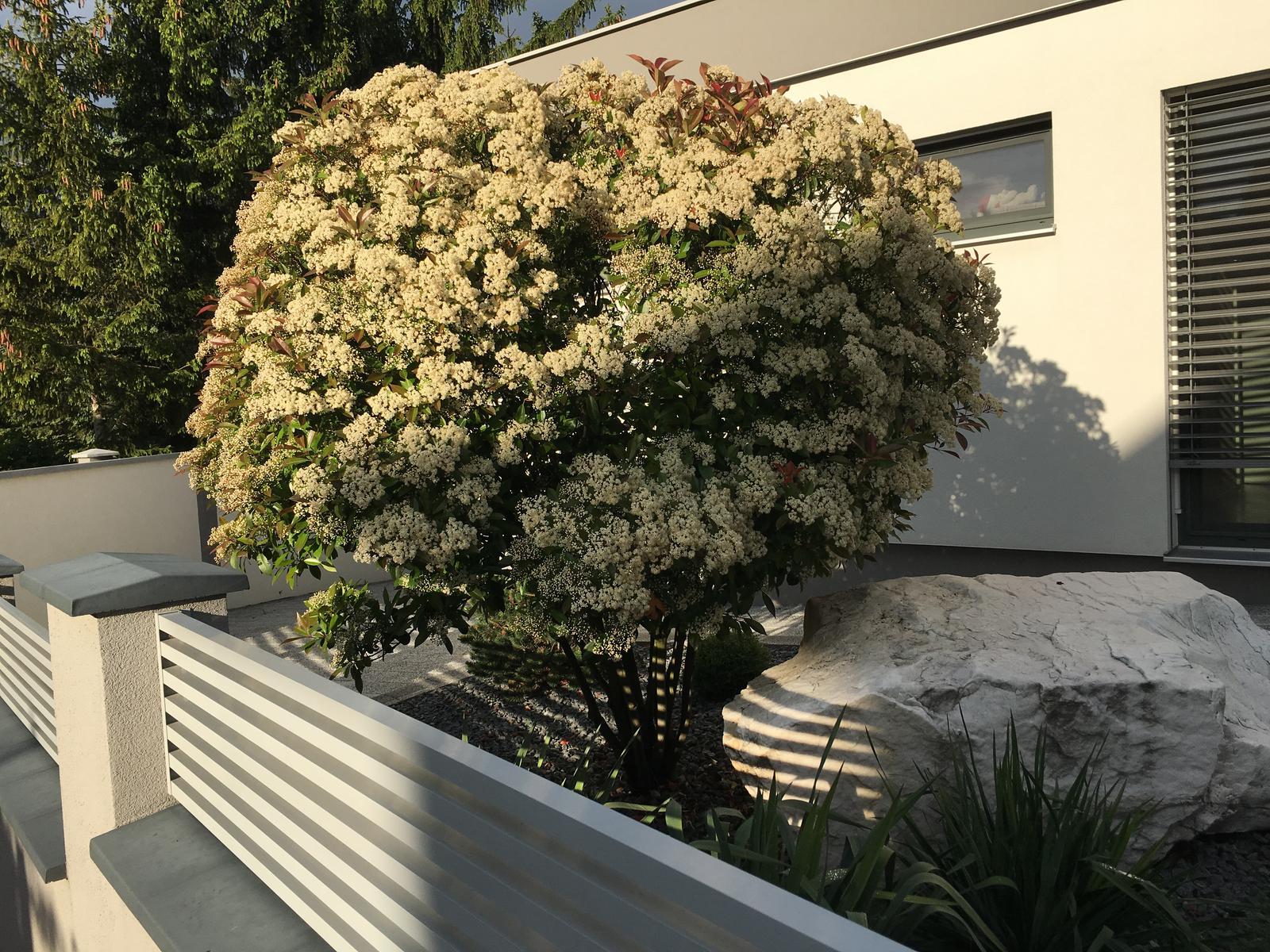 Aj ked je stale zima a prsi nas stromcek krasne rozkvitol - Obrázok č. 3
