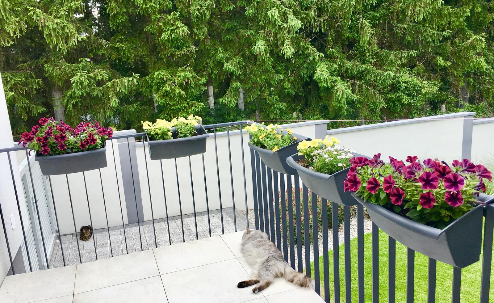 Letna kuchyna & kvety na terase - Obrázok č. 3