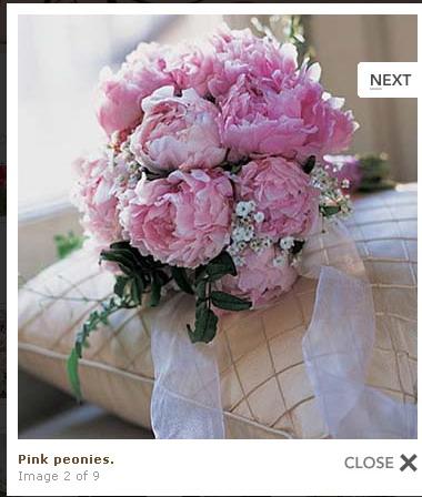 Kvety - Obrázek č. 10